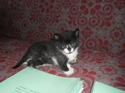 Домашнего котенка в дар